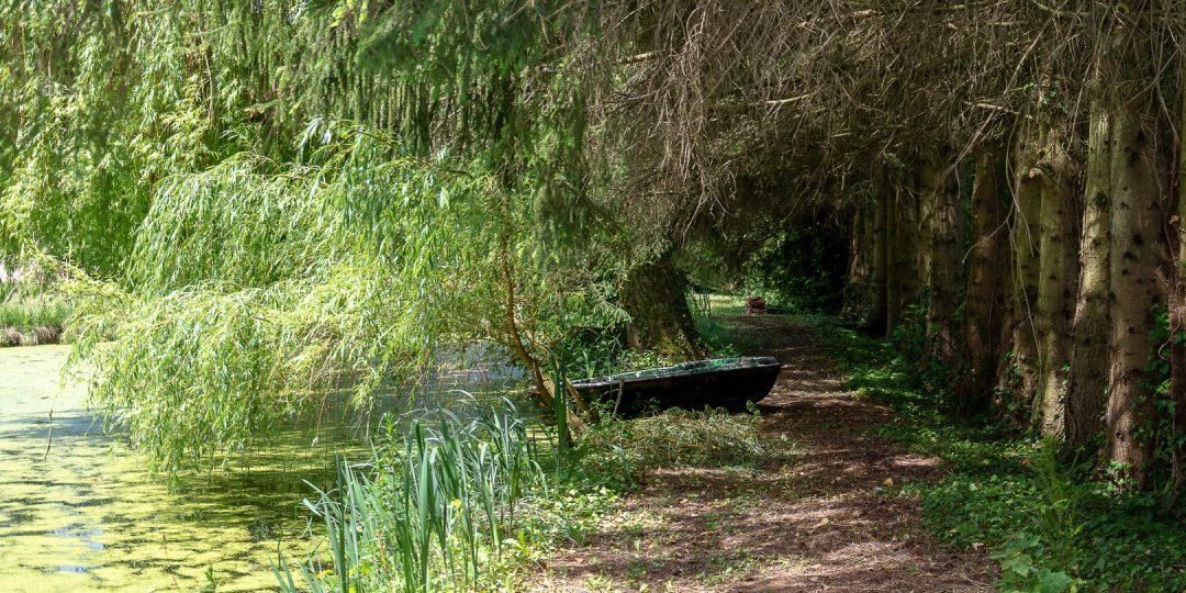 le sentier qui longe l'étang